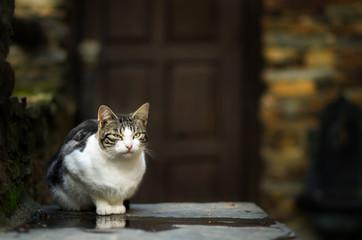 Gato quieto