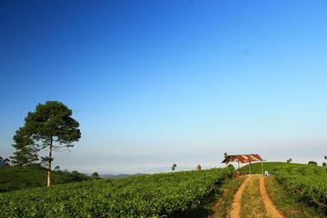 green tea park