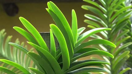Plants, Leaves, Foliage, Nature