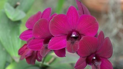 Flowers, Flowering Plants, Nature