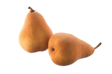 Two Beurre Bosc pears