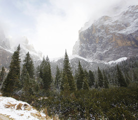 Beautiful winter treescape and mountain in foggy day