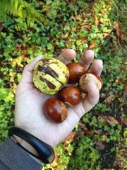 handful of conkers