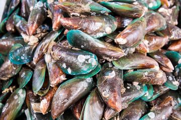 green mussel