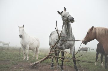 Horses and massage bush
