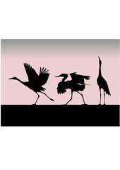 silhouette of the birds