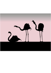 silhouette of the flamingo