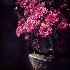 carmine flowers on the vase