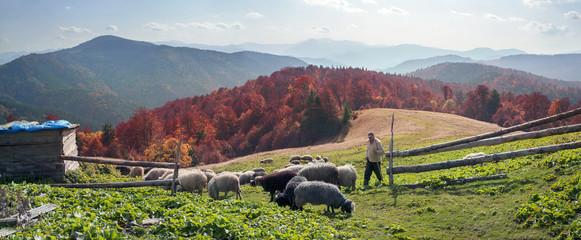 Transcarpathian pastures in autumn