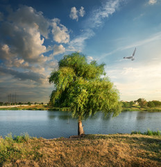 Bird over the osier near river
