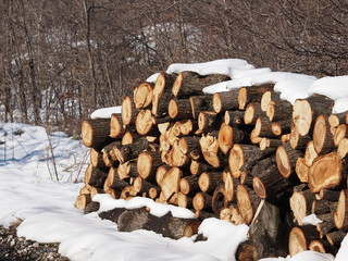 Stack of oak wood in  winter