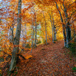 winding road in autumn landscape