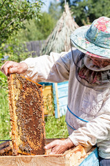 Beekeeper holds in hand a frame with honey honeycombs and bees
