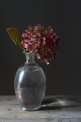 Pink hydrangea on antique classic glass on dark background