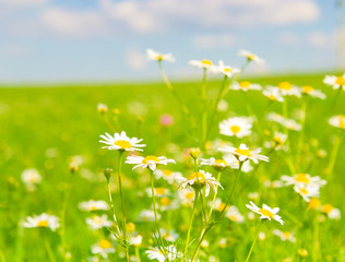 Wallpaper Grass Horizon