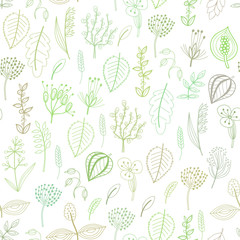 Seamless pattern of plants and herbs, floral background