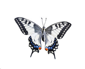 swallowtail butterfly isolated on white