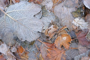 Frozen leaves for scrapbooking