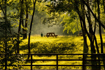 wooden tables on the sunny forest glade