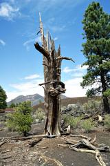 Vergänglichkeit Baum