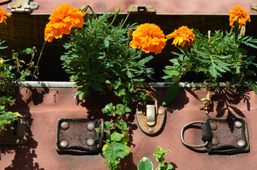 Flower beds in an old suitcase (travel, travel, travel agency, d