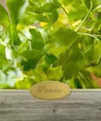 Parsley labeled