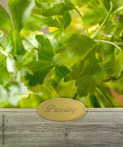 canvas print picture Parsley labeled