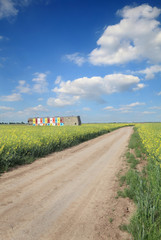 Agriculture, country road through canola field with beehives
