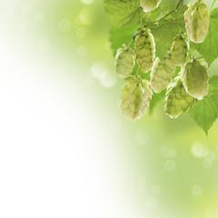 Bunch of hops.