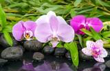 Wellness: Orchideen, Steine, Bambus und Wasser :)