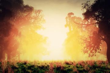 Mysterious Magical Fantasy Fairy Tale Forest Sunset Sunrise 3D