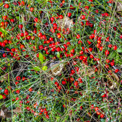 detail of meadow with red berries