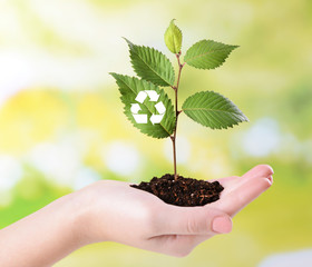 Plant with recycle symbol in hand on bright background