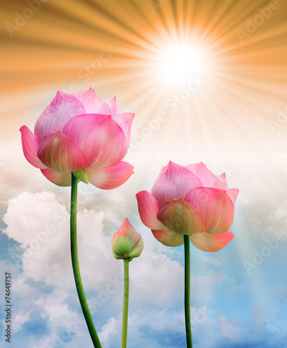 Staande foto Lotusbloem pink lotus and sun light in blue sky background