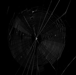 spider web in the dark background