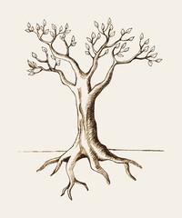 Sketch illustration of a tree