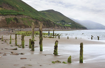 Wooden poles with mud and seaweed on the beach of Atlantic Ocean