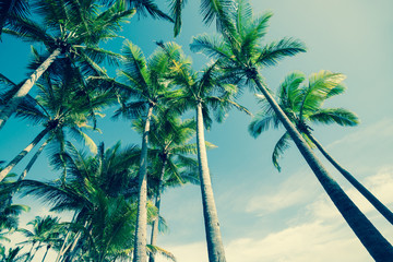 Retro image Palm trees low angle view.