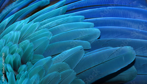 Deurstickers Vogel Macaw Wing Feathers