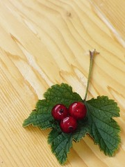 Redcurrant on the table