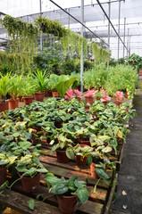 Plants in pots on sale