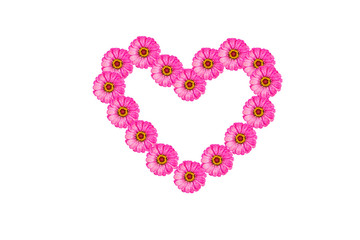 pink heart zinnia flower