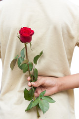 hand hold red rose flower