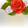 Obrazy na płótnie, fototapety, zdjęcia, fotoobrazy drukowane : Rose background