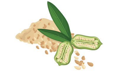 Sesame seeds, fruit, leaf, Vecctor illustration