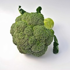 Fresh broccoli on white background