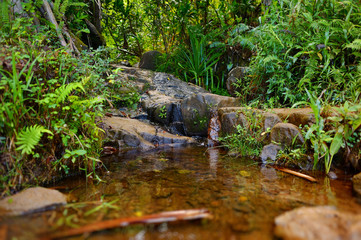 Small tropical river or stream