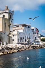 Seagulls flying in Ischia island
