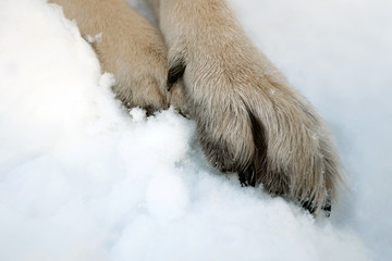 Paws in Snow