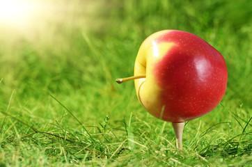 Apple on golf tee